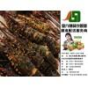 金六穗餐饮专业提供海鲜配送——杏坛海鲜配送中心