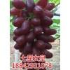 阳光玫瑰葡萄苗专业供应商_乌海阳光玫瑰葡萄苗