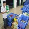 源生农副产品配送哪家好-受欢迎的源生农副产品配送